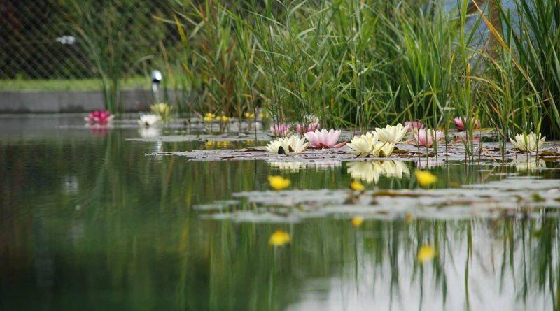 staw-w-ogrodzie, oczko-wodne, ogrod